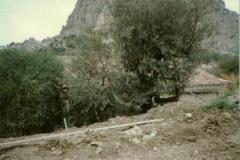 abbey-10_20121013_2048322409
