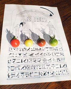 tomato stele