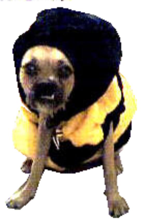 space dog clr